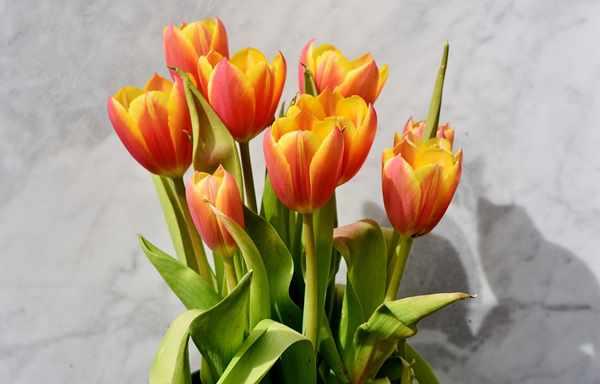 Kwiaty z dostawą we Wrocławiu