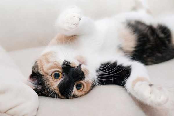 Dlaczego warto sterylizować koty